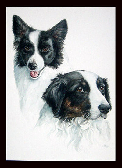 Romey & Julia ( Border Collie's )
